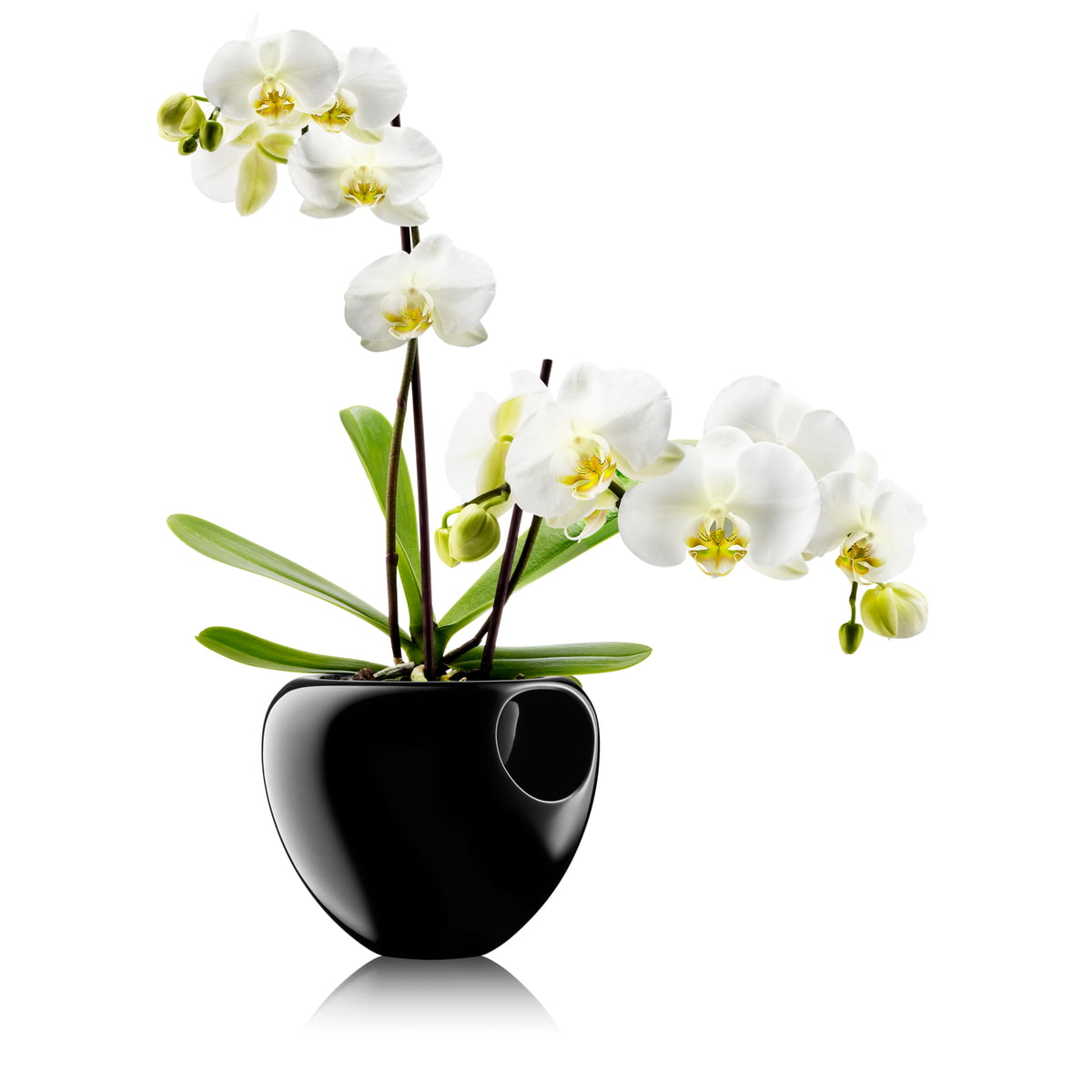 Orchid pot by eva solo in the design shop eva solo orchid pot black reviewsmspy