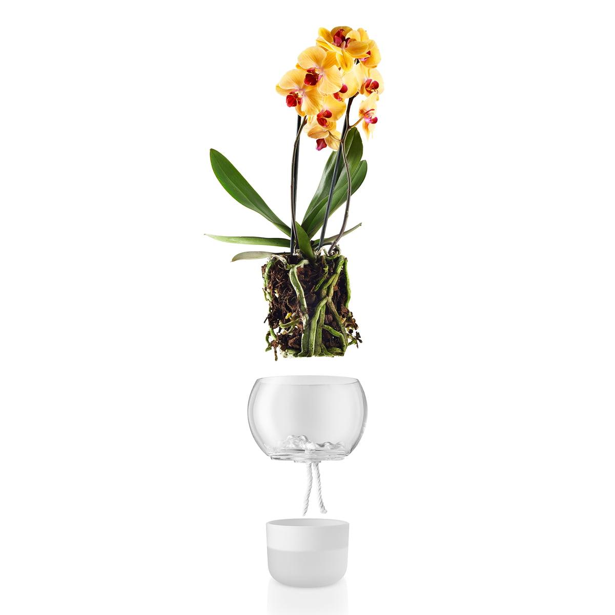 Self watering flower pot by eva solo self watering flower pot for orchids 15 cm by eva solo reviewsmspy