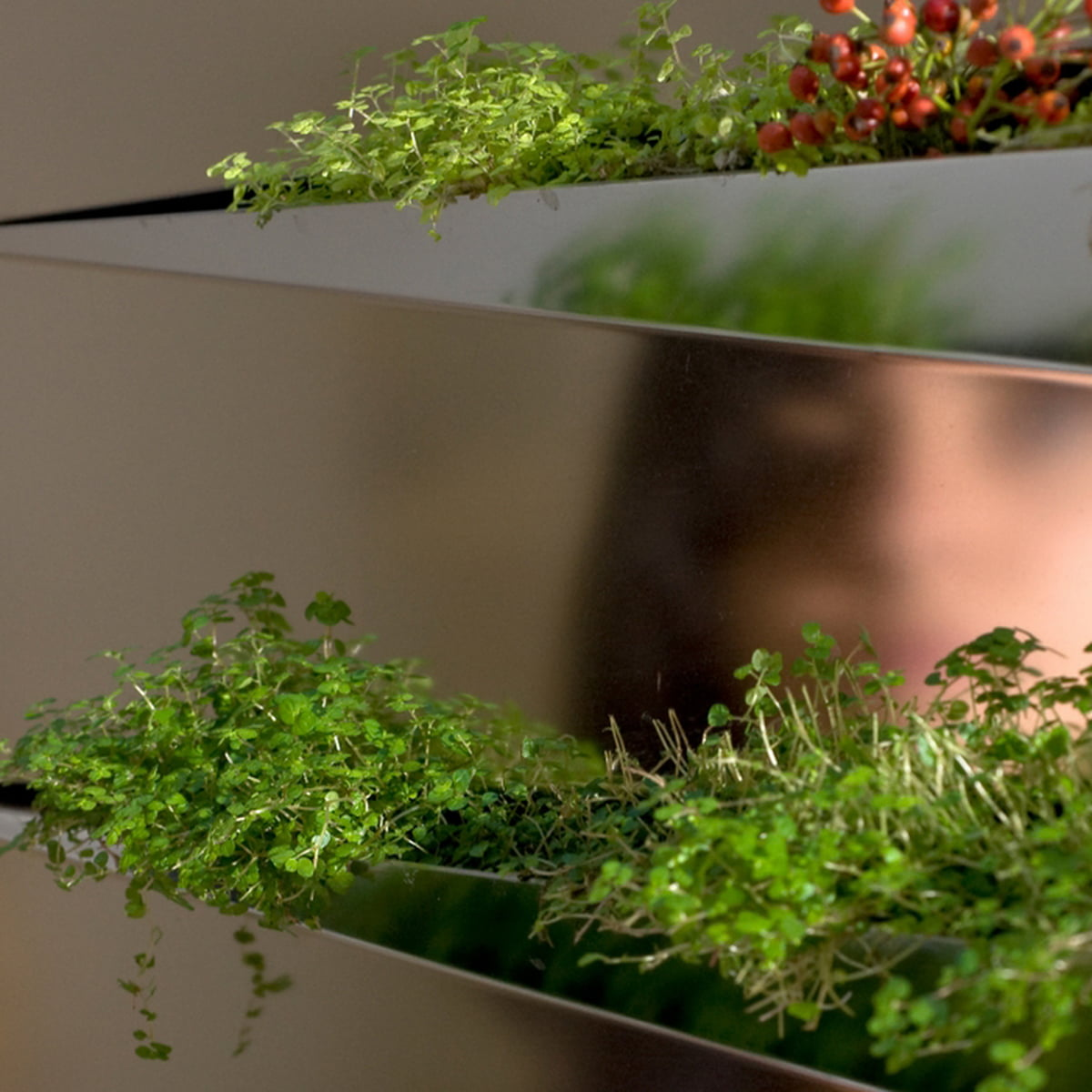 Edition compagnie miroir en herbe planter for Miroir application android