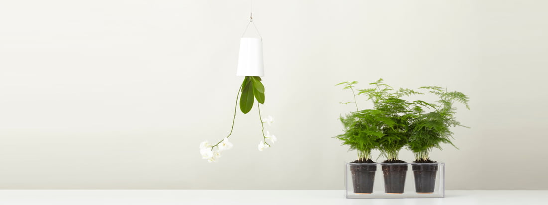 Boskke, a manufacturer from New Zealand, is known for its Sky Planter & the Cube plant pot. Buy the flower pot hanging from the ceiling and the transparent plant pot here in the shop..