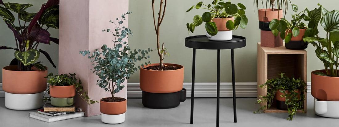 Flashsale: Indoor Gardening