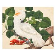 IXXI - Salom-Crested Cockatoo (Reeves)