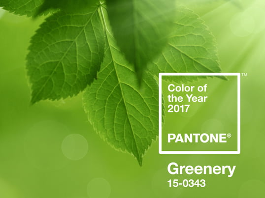 Greenery is a bright and fresh green. The intensive light green was chosen by a jury as a trend colour for 2017 and stands for hope, calm and refreshment.