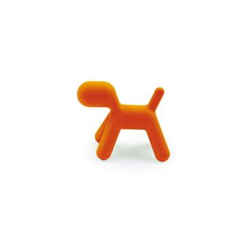 Puppy S, orange