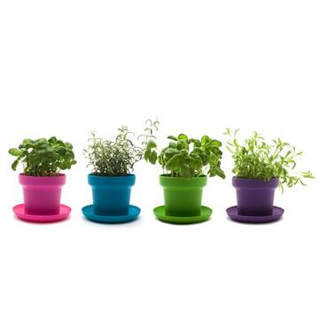 Authentics - Green plant pot, green, turquoise, pink, purple plants