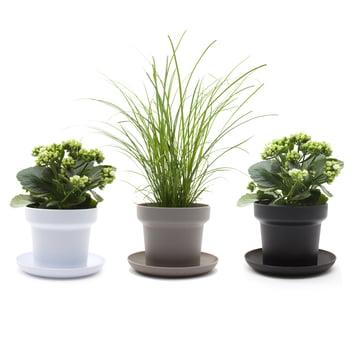 Authentics - Green plant pot, white, grey, black - plants