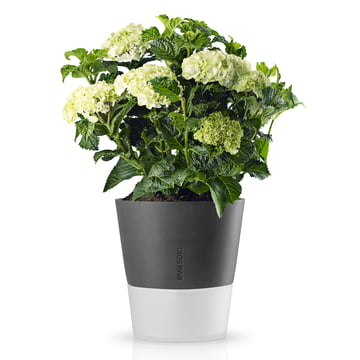 Eva Solo - Flower pot Ø 25 cm stone grey, with flowers