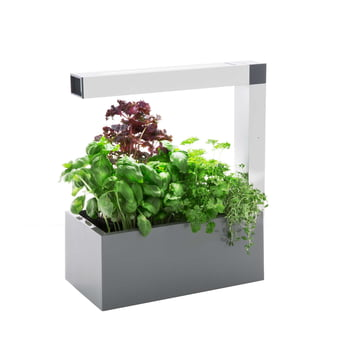 Tregren - Herbie Indoor Garden - grey