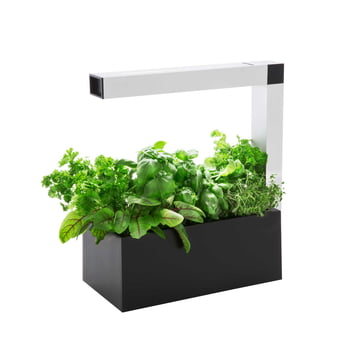 Tregren - Herbie Indoor Garden - black