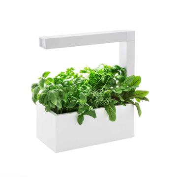 Tregren - Herbie Indoor Garden - white