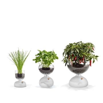Self-watering Gaia Greenhouse
