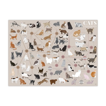 Cats Categorized 61 x 46 cm by Pop Chart Lab