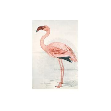 Flamingo (Finch-Davies) by IXXI in 80 x 120 cm