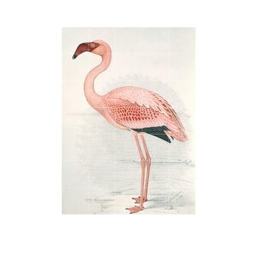 Flamingo (Finch-Davies) by IXXI in 100 x 140 cm