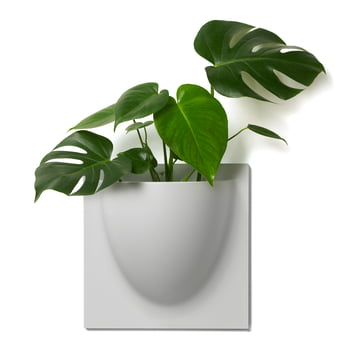Wall Pot by VertiPlants in Grey