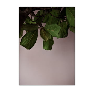 Green Leaves 50 x 70 cm by Paper Collective