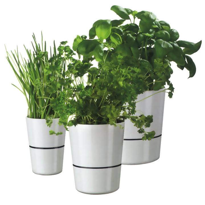 Rosti Mepal - Hydro Herb pot - Group