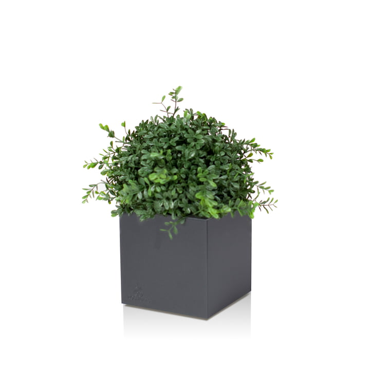 Linné Planting Pot, 40 x 40 x 40 cm by Röshults in anthracite