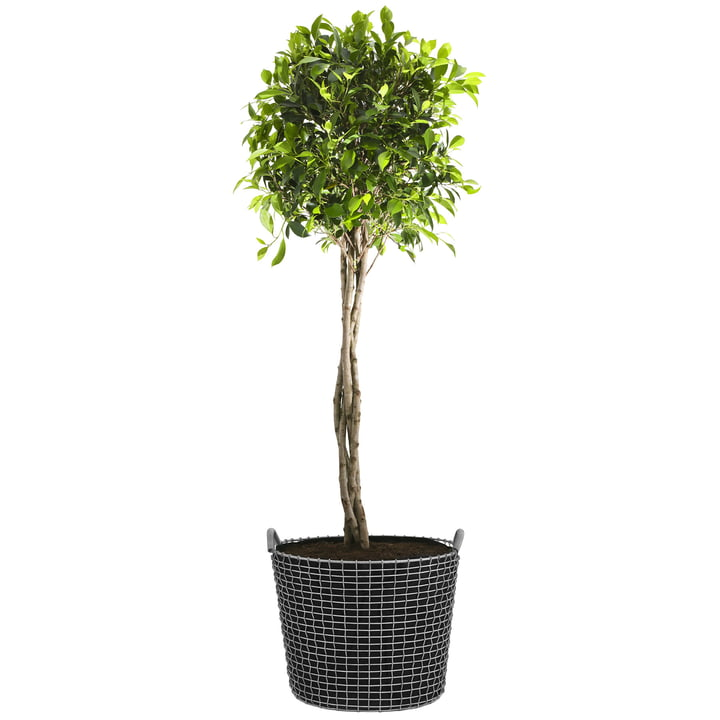 Classic 50 Wire Basket by Korbo with Plant Bag