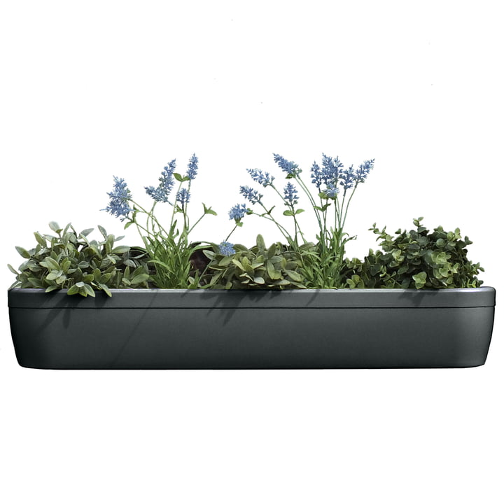 The windowgreen window sill Flower-Box by rephorm in graphite.