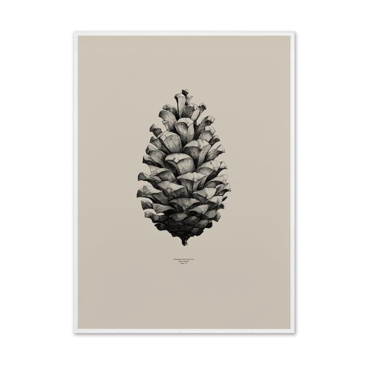 Paper Collective - Nature 1:1 Pine Cone (sand)