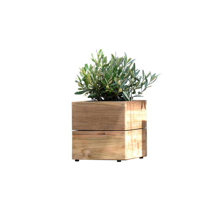 Flowerpot Minigarden in natural teak without frame from Jan Kurtz in Klein