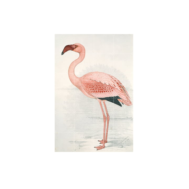 Flamingo (Finch-Davies) by IXXI in 80 x 120 cm