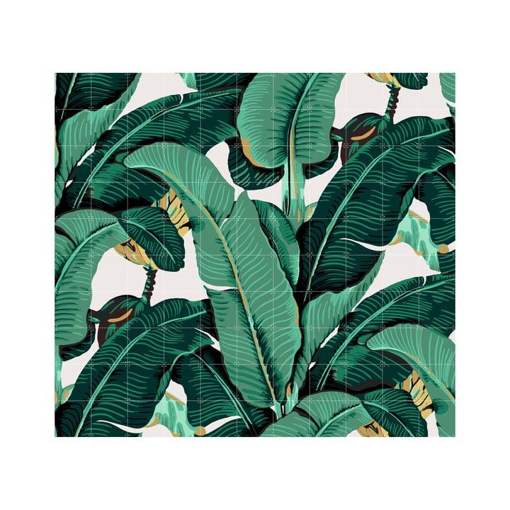 Banana Leaf by IXXI in 220 x 200 cm