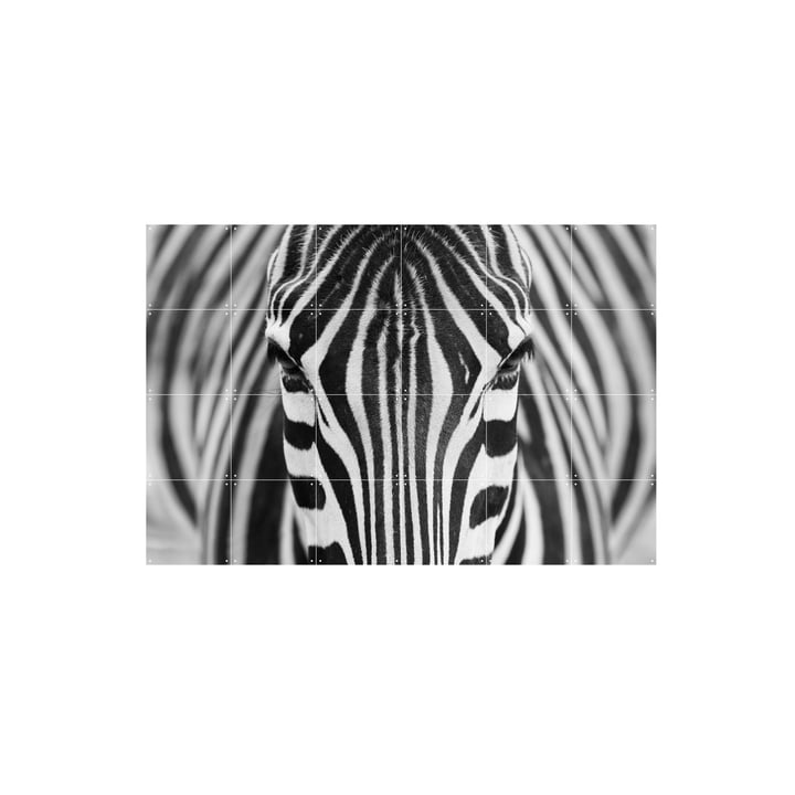Zebra by IXXI in 120 x 80 cm