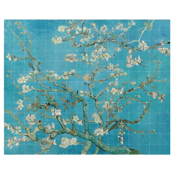 Almond blossom (Van Gogh) 320 x 260 cm from IXXI