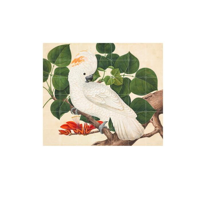 Salom-Crested Cockatoo 140 x 120 cm by IXXI
