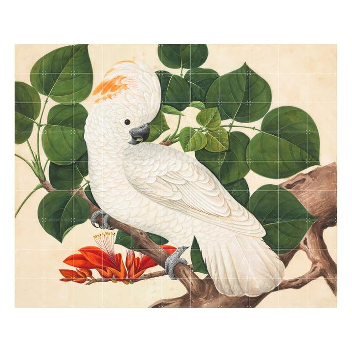 Salom-Crested Cockatoo 220 x 180 cm by IXXI