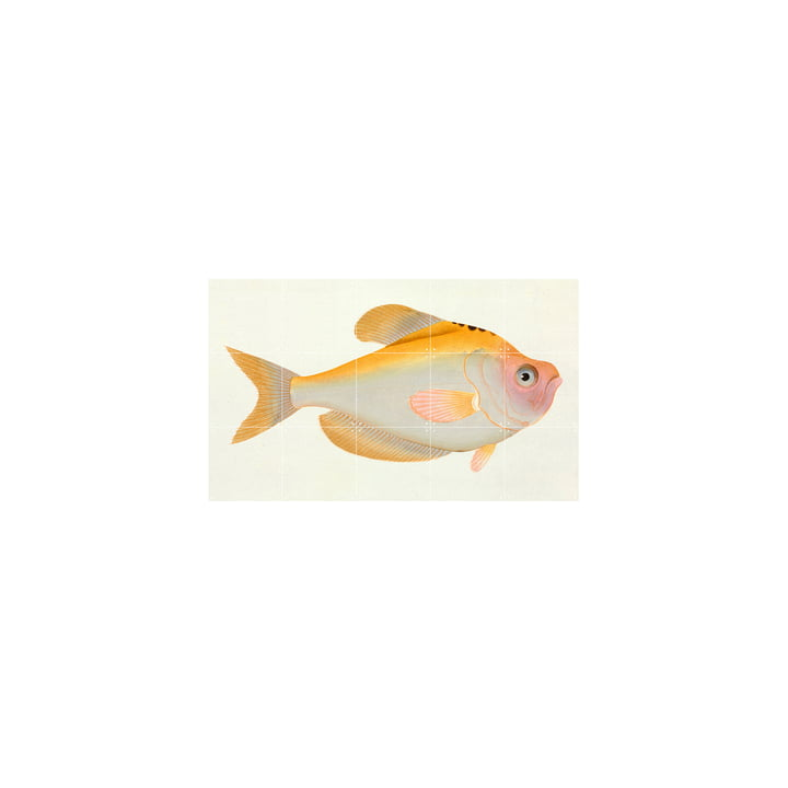 Yellow Fish (Bloch) 100 x 60 cm by IXXI