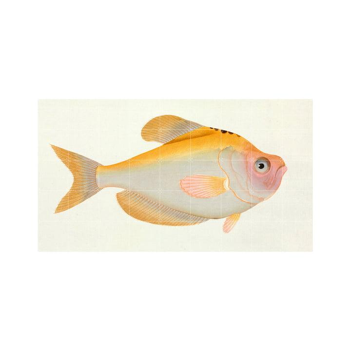 Yellow Fish (Bloch) 180 x 100 cm by IXXI