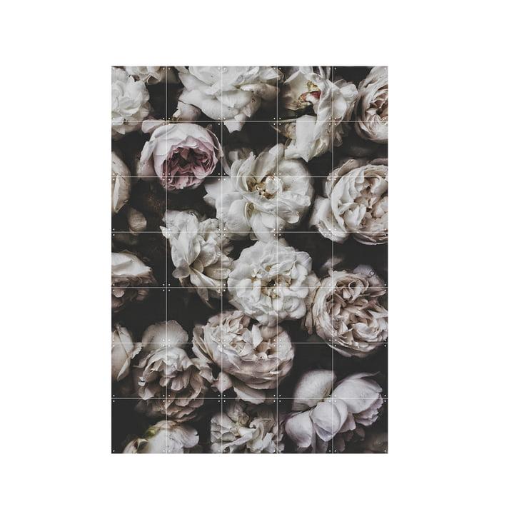Peony Roses (Lemholt) 100 x 140 cm by IXXI
