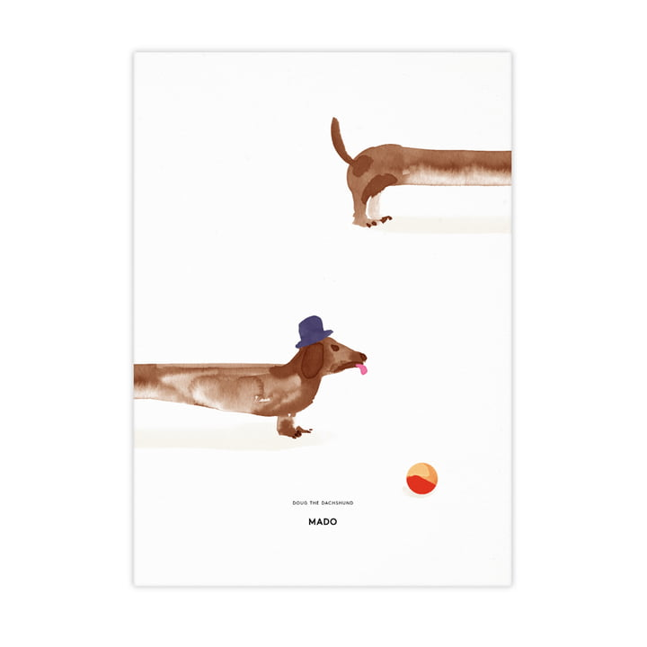 Doug the Dachshund from Paper Collective , 50 x 70 cm