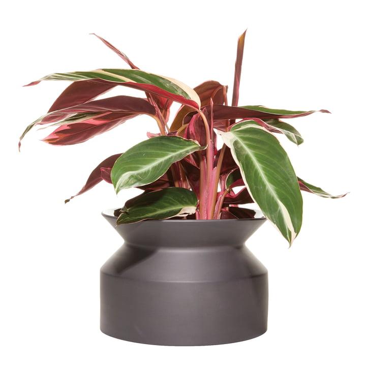 Spool plant pot Large from Boskke in black