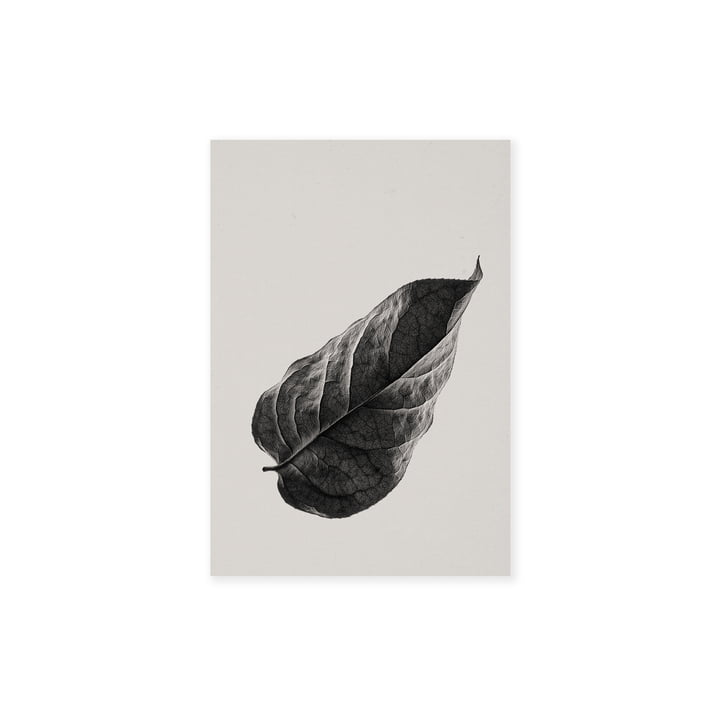 Sabi Leaf 01 30 x 40 cm from Paper Collective