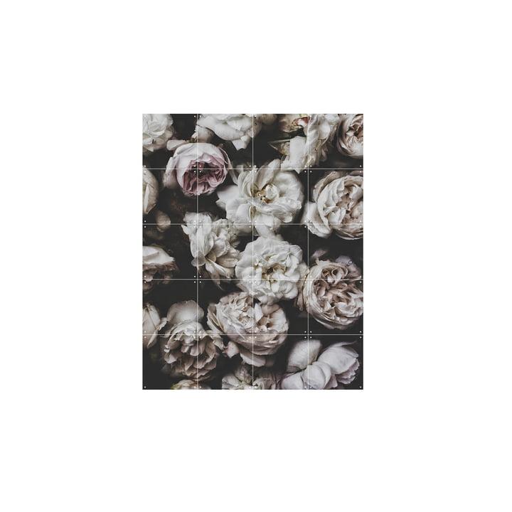 Peonies (Lemholt) 80 x 100 cm from IXXI