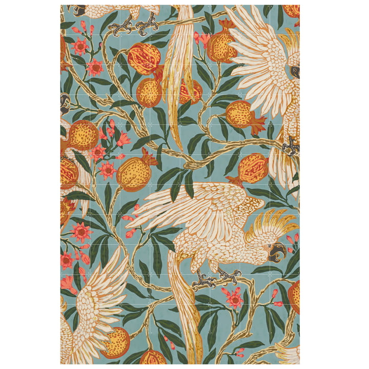 Cockatoo and pomegranate wallpaper (Crane) 160 x 240 cm from IXXI