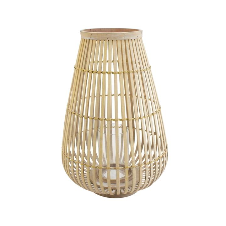 Big bamboo wind light in nature