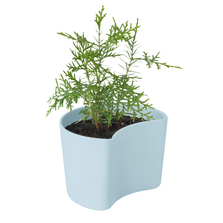 Your Tree flowerpot with seeds by Rig-Tig by Stelton in blue