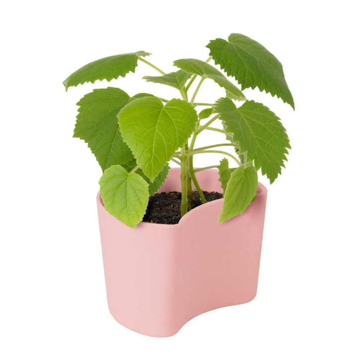 Your Tree flowerpot with seeds from Rig-Tig by Stelton in pink