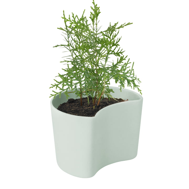 Your Tree flowerpot with seeds from Rig-Tig by Stelton in green