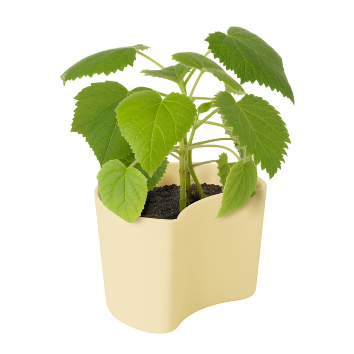 Your Tree flowerpot with seeds from Rig-Tig by Stelton in yellow