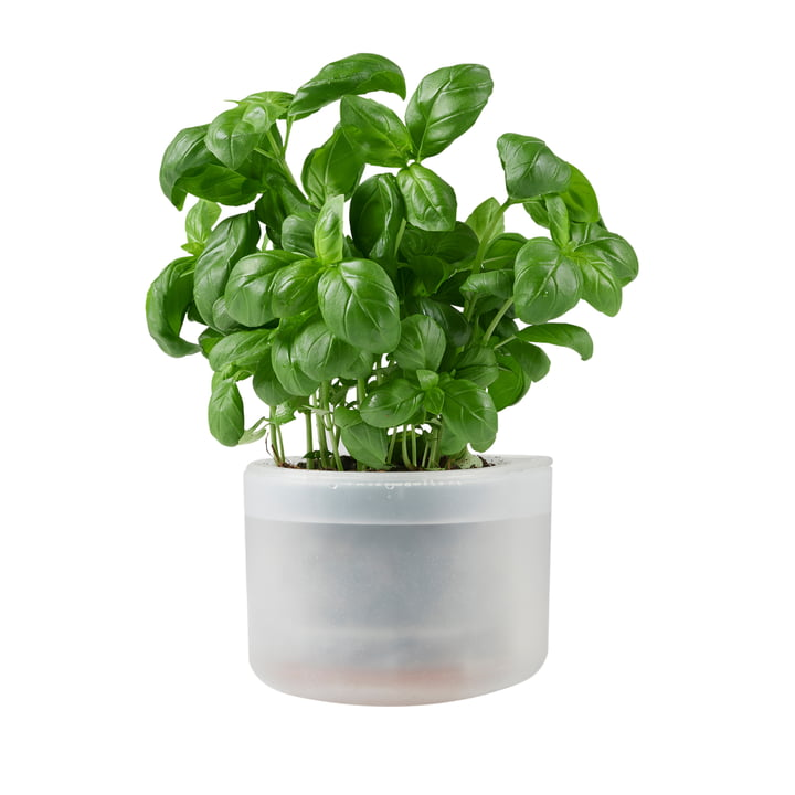Till Planter Small, transparent from Boskke