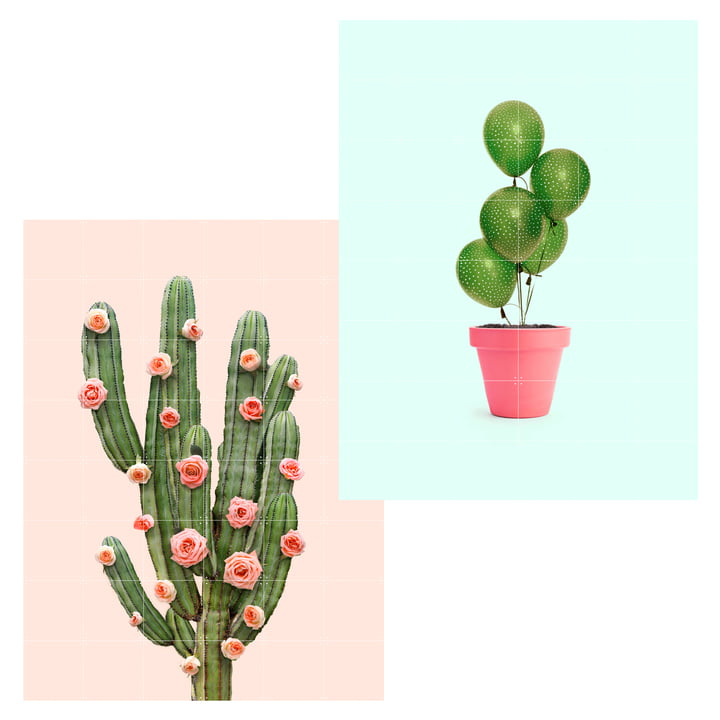 Cactus balloons and roses poster, 120 x 160 cm by IXXI
