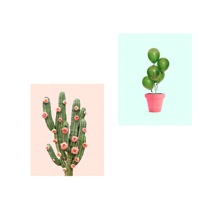 Cactus balloons and roses poster, 80 x 100 cm by IXXI