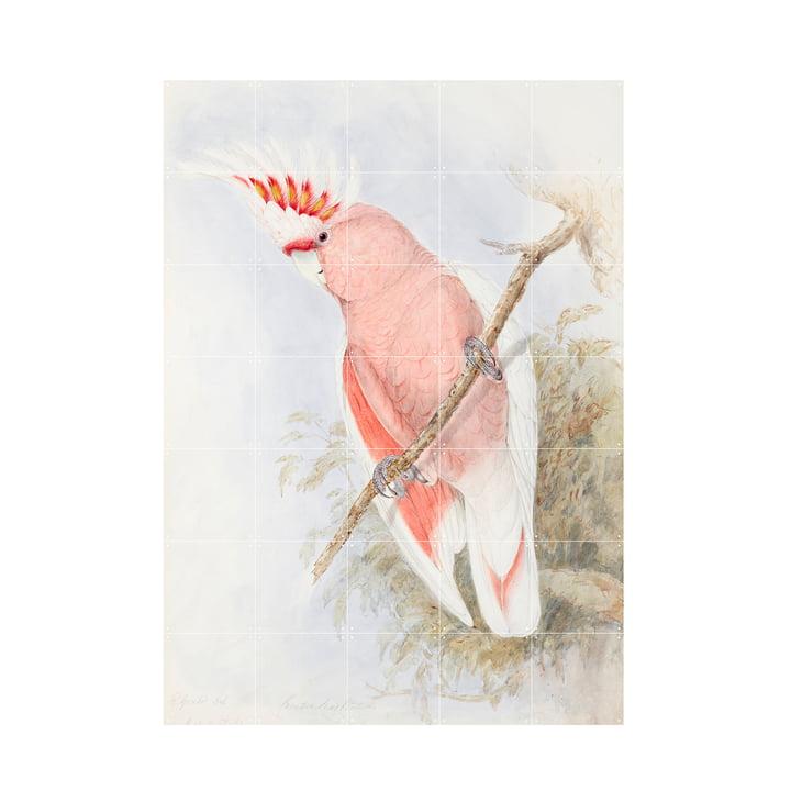 Pink Kakadu Mural from IXXI in size 100 x 140 cm