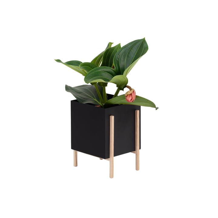 The Botanic Pot from Design House Stockholm , black / nature